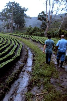 Alumbre Coffee is responsibly-farmed with the environment and workers in mind. Coffee Girl, Coffee Shop, Coffee Tasting, Shop Around, Keurig, Feel Good, Beautiful Pictures, Environment, Artisan