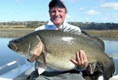 40 kilogram Murray c