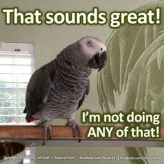 We've chosen the best bird memes and compiled them all in one spot. We hope you enjoy the humor and cleverness of these selections.: Felix Takes A Stand Parrot Pet, Parrot Toys, Parrot Bird, Caique Parrot, Funny Birds, Funny Animals, Cute Animals, Animal Funnies, Animal Memes
