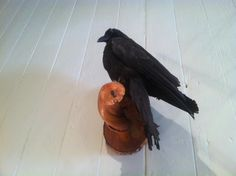 Gogo's crow. New Orleans. Photograph: Penny Weaver