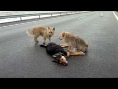 Cachorro não abandona amigo - Nem morto