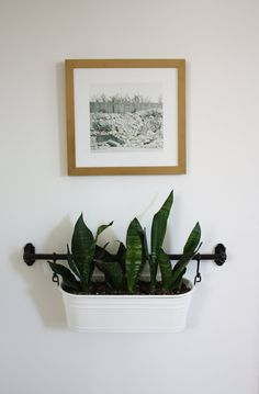 Snake plant, Mother-in-law's tongue, sansevieria, in IKEA Fintorp condiment pail. Mounted on rail on wall. Marti & Jarrod's Graphic Modern Home — House Tour Hanging Plants, Indoor Plants, Wall Mounted Planters Indoor, Diy Hanging, Fintorp Ikea, Bathroom Plants, Plant Holders, Plant Decor, Decoration