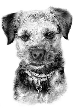 Pencil sketch of a dog from a photo. If you seek something a little more creative and memorable, I can provide the perfect photo-realistic drawings from photos that capture the subjects' likeness, mood, and personality.