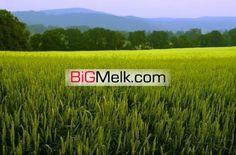 فروش18هزار متر زمین کشاورزی