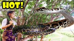 Incredible human Attack Anaconda on the tree | How to Attack Anaconda In...
