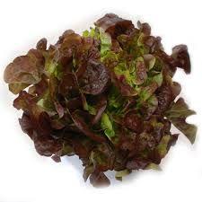 De bladeren van de eikenbladsla lijken, zoals de naam al doet vermoeden, op de bladeren van een eik. De kleur is meestal groen met rood-bruine randen, maar er zijn ook compleet groene varianten. De sla is zacht, smaakt mals en iets nootachtig. In veel zakken gemengde sla is eikenbladsla verwerkt vanwege zijn decoratieve uiterlijk.