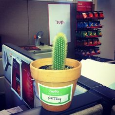 meet petey. our new office plant.