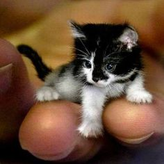 Um...too darn cute!! Even if it's not real.