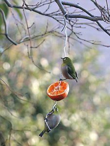 庭に野鳥を呼ぶ、餌台、バードフィーダー、ヒヨドリ除け