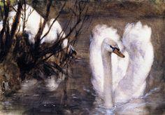 Two Swans, Adolph von Menzel