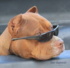 Share! AND help us show the world how wonderful pit bulls really are! #pitbull