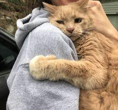 This little bastard hugging his mum after being lost for 5 hours - [Sleepy Cats] - Katzen Bilder I Love Cats, Crazy Cats, Cute Cats, Funny Cats, Cute Baby Animals, Animals And Pets, Funny Animals, Animals Images, Cat Hug