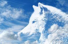 Lobo, Nuvens, Céu, Atmosfera