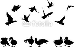 duck silhouette clip art | mallard duck silhouettes collection for designers by Accent, Royalty ...