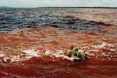 Rio Negro and Rio Amazonas - Manaus Amazonia Brazil