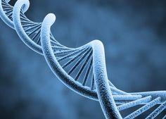 Cientistas sugerem que há outros seres humanos vivendo dentro de nós - http://controversia.com.br/20258