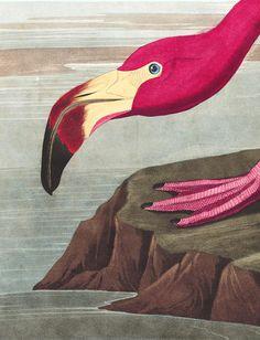 Free high res downloads - John James Audubon's Birds of America | Audubon