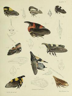 biodiversity library flickr