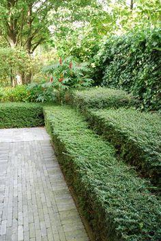 garden design ideas with rocks Hedging Plants, Planting Shrubs, Sun Plants, Shade Plants, Love Garden, Garden Pots, Plant Design, Garden Design, Garden Hedges