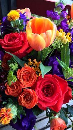 Rose Flower Wallpaper, Flowers Gif, Love Flowers, My Flower, Beautiful Flower Designs, Amazing Flowers, Beautiful Roses, Beautiful Scenery Pictures, Beautiful Flowers Wallpapers