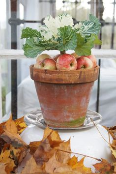 apples in the pot...