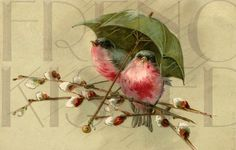 Red breasted BIRDS under Umbrella Pussy Willows French antique postcard