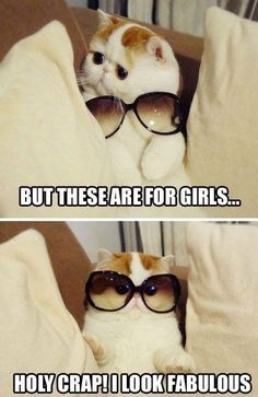 aawwwww, but i still hate cats