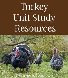 We are doing a short study on a very important part of Thanksgiving - turkey! Yes, we planning a Thanksgiving Turkey Science Study!