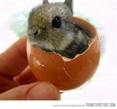 Easter cuteness…