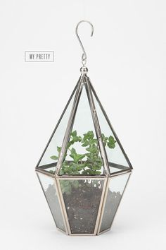 When I first saw this, I thought it was an earring. It would have been the world's coolest earring. Sadly, it's not. It's just a cute hanging terrarium.