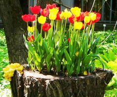Balcony garden Planters - 19 Blazing Tree Stump Planter Ideas that'll Impress You. Tree Stump Decor, Tree Stump Planter, Removing Tree Stumps, Garden Web, Old Trees, Arte Floral, Garden Planters, Balcony Garden, Succulents Garden