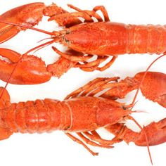 Put your claws in the air, it's National Lobster Day!
