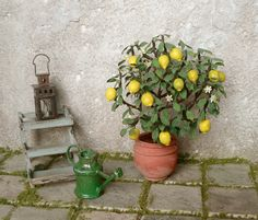 Lemon tree with garden furniture by Alexandra Cantatore