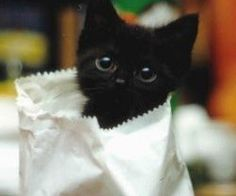 dying here! Cute little kitty that looks like Toothless:)