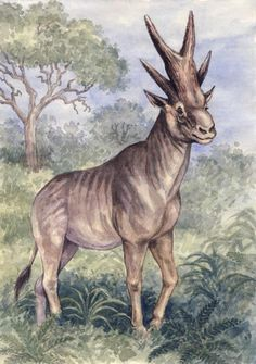 Bramatherium is an extinct genus of giraffe that ranged from India to Turkey in Asia.
