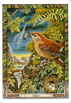 Celtic Wren  June 10 - July 7