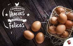 Gallinas felices: ¿Por qué preferir estos huevos libres de jaula? Chocolate Caliente, Eggs, Ideas, Chicken Eggs, Cattle, Farmhouse, Bebe, Egg, Thoughts