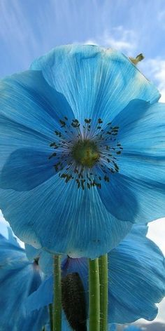 ** Beautiful blue.