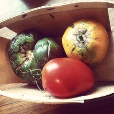What Makes an Heirloom Tomato? #Gardening, #Heirloom, #Tomatoes #Gardening