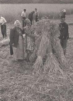 Best: Serie van 5 foto's van het oogsten en verwerken van koren - 1965