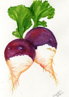 Turnips watercolor painting original  vegetable by SharonFosterArt, $12.00