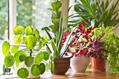 كيفية العناية بالنباتات المنزلية وأنواعها
