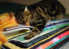 Marjan Kluepfel: Fabric Artist-Quilt Teacher - Trees Gallery. Quilters cats have a good life!