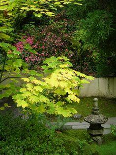 Portland Japanese Garden; Photo by Suzanne Schneider