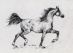 Running Arabian Horse Drawing 1 Art Print by Angel Ciesniarska. All prints are professionally printed, packaged, and shipped within 3 - 4 business days. Choose from multiple sizes and hundreds of frame and mat options.