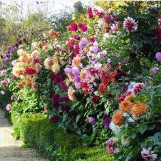 May Garden, Dream Garden, Beautiful Gardens, Beautiful Flowers, Rare Flowers, Garden Front Of House, Jasmine Plant, Dahlia Flower, Belleza Natural