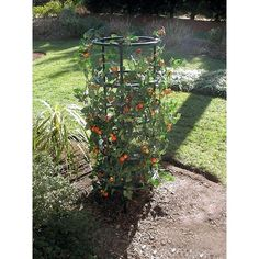 For next season's tomatoes