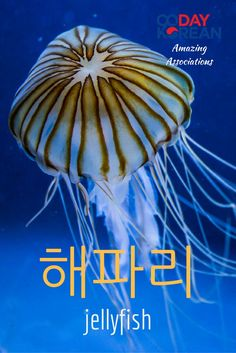 How could you remember 해파리 (jellyfish)? Reply in the comments below with your association!