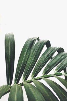Palm!