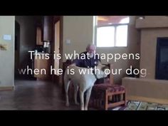 Lisa's dad is in the advanced stages of Alzheimer's disease. The disease has slowly eaten away at her father's ability to form sentences and find the words he needs to communicate. But watch what happens when he's around her dog... | The Way This Man With Alzheimer's Transforms When A Dog Is In The Room Will Make You Melt